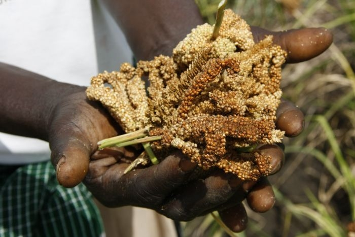 Picture: A handful of hope in Gulu, northern Uganda by DFID, licence CC BY 2.0