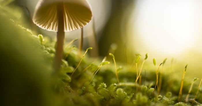 Picture: untitled by Manuel Barroso Parejo, license CC0, cropped
