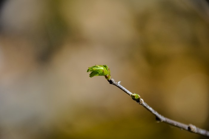 Picture: Spring by Michael Wolgast, license CC BY-ND 2.0