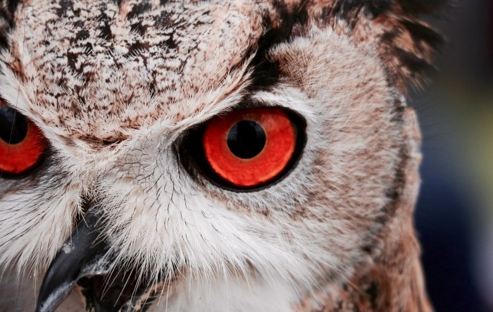 Picture: Owl by Massimo Mancini, license CC0
