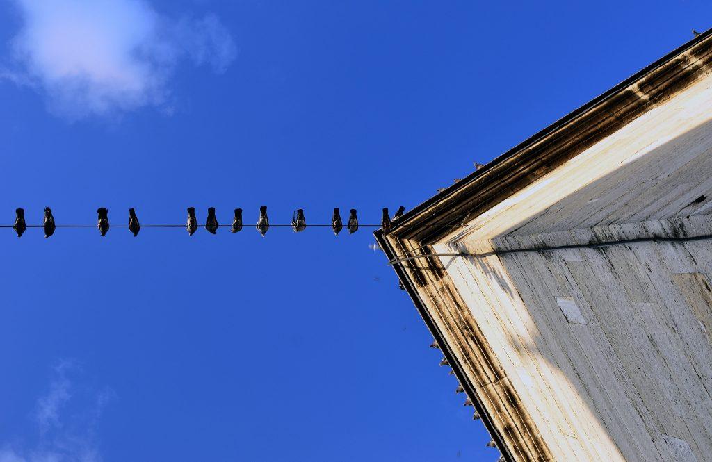 Birds on a line by Vladimer Shioshvili, licence: CC BY-SA 2.0