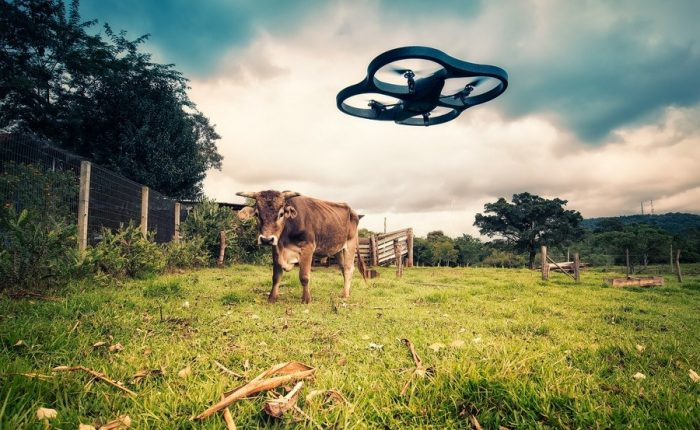 Picture: Drone vs Cow by Lima Pix, licence: CC BY 2.0