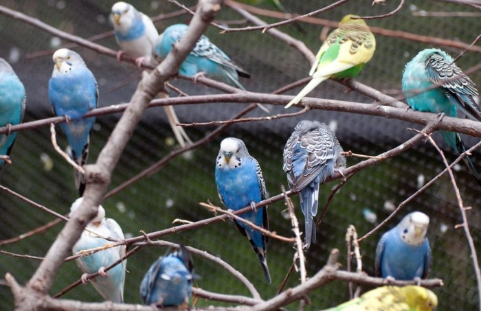Blue Parakeet Tree by Eric Kilby, licence: CC BY-SA 2.0