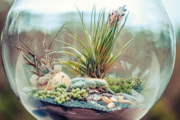 Terrarium by Sonny Abesamis, licence CC BY 2.0