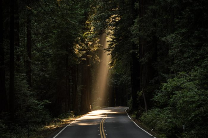 Picture: Beam of light on a forest road by John Towner, license Unsplash